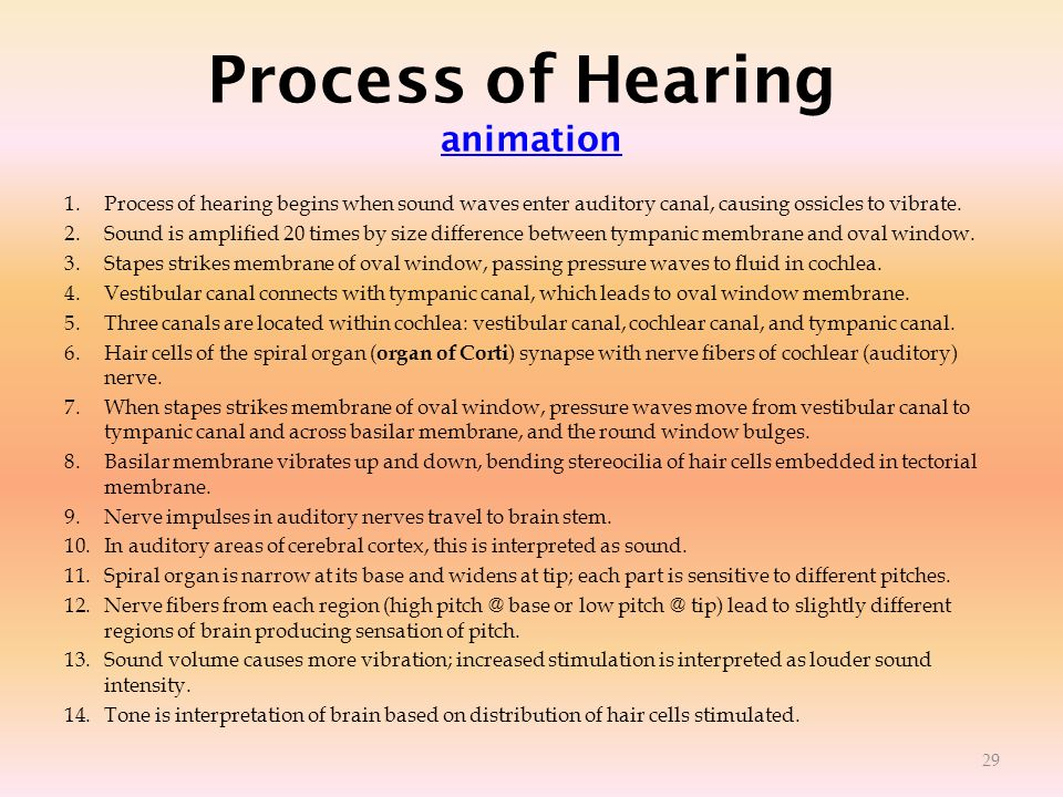 Process of Hearing animation animation 1.Process of hearing begins when sound waves enter auditory canal, causing ossicles to vibrate. 2.Sound is ampl