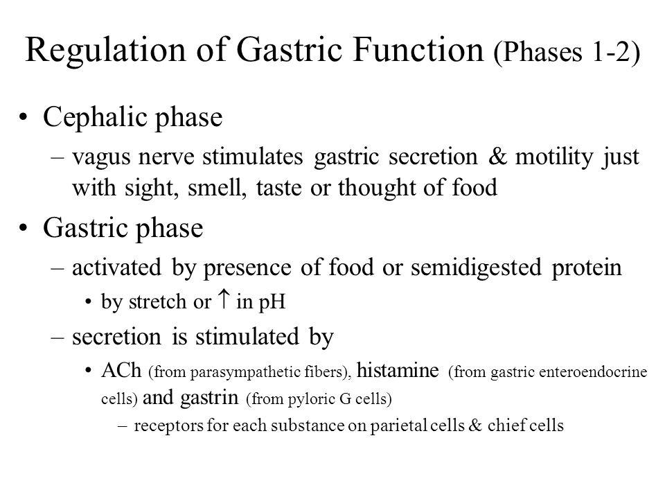 Regulation of Gastric Function (Phases 1-2) Cephalic phase –vagus nerve stimulates gastric secretion & motility just with sight, smell, taste or thoug