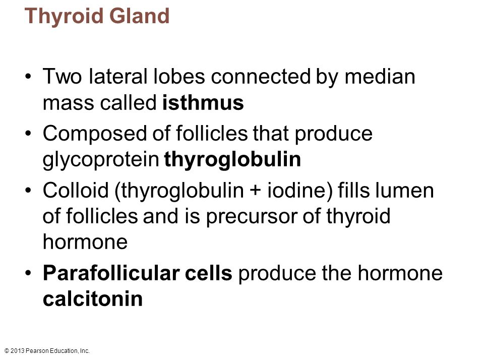 © 2013 Pearson Education, Inc.Figure 16.9 The thyroid gland.