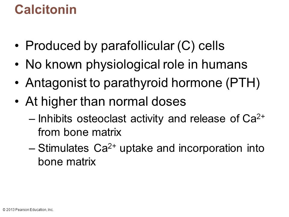 © 2013 Pearson Education, Inc. Calcitonin Produced by parafollicular (C) cells No known physiological role in humans Antagonist to parathyroid hormone