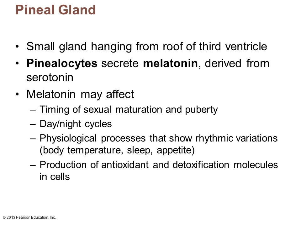 © 2013 Pearson Education, Inc. Pineal Gland Small gland hanging from roof of third ventricle Pinealocytes secrete melatonin, derived from serotonin Me