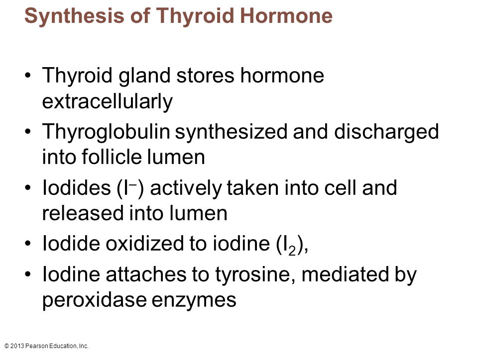 © 2013 Pearson Education, Inc. Synthesis of Thyroid Hormone Thyroid gland stores hormone extracellularly Thyroglobulin synthesized and discharged into