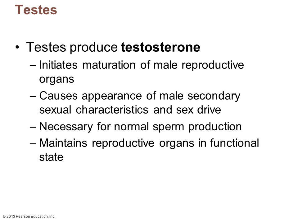 © 2013 Pearson Education, Inc. Testes Testes produce testosterone –Initiates maturation of male reproductive organs –Causes appearance of male seconda