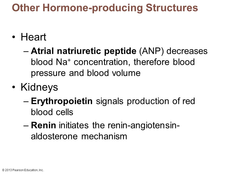 © 2013 Pearson Education, Inc. Other Hormone-producing Structures Heart –Atrial natriuretic peptide (ANP) decreases blood Na + concentration, therefor
