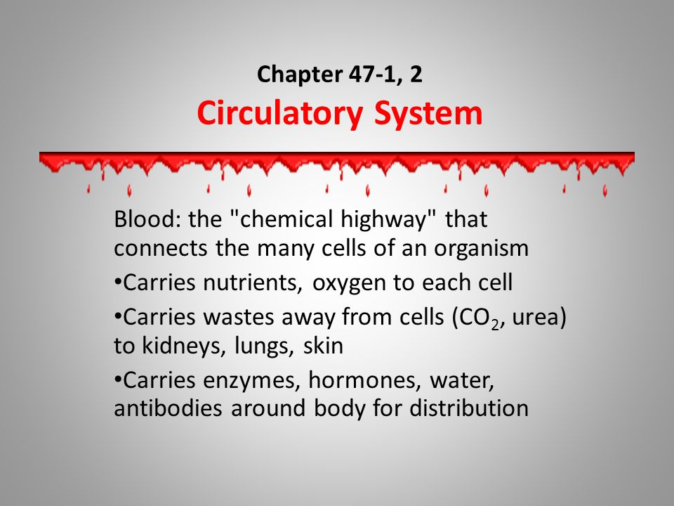 Chapter 47-1, 2 Circulatory System Blood: the