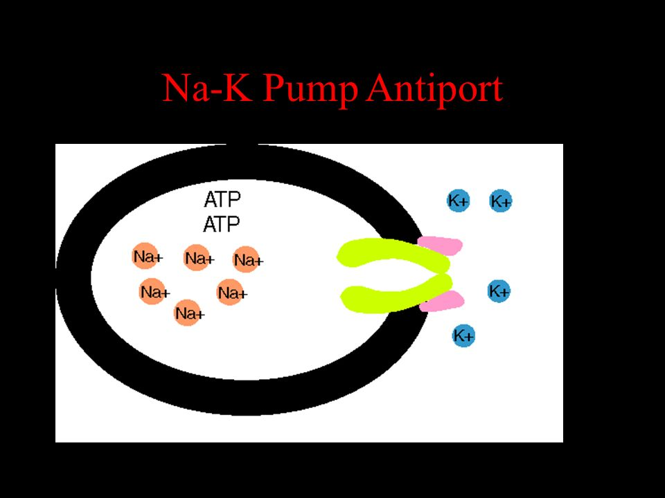 Na-K Pump Antiport