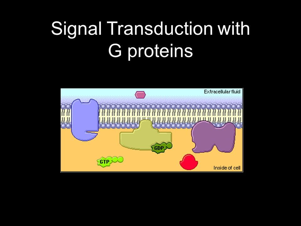 Signal Transduction with G proteins