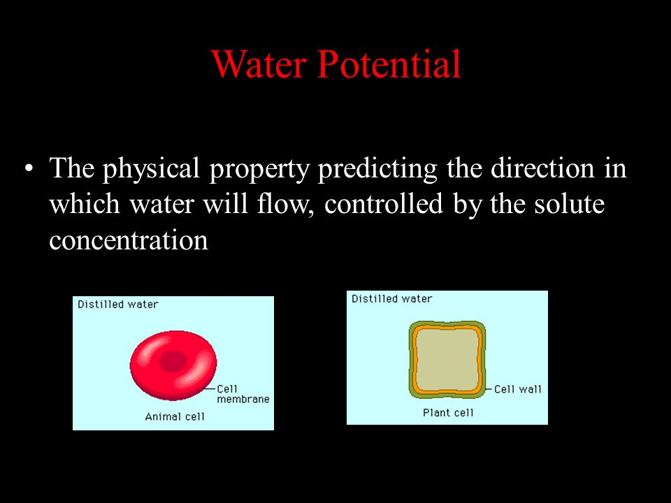 Water Potential The physical property predicting the direction in which water will flow, controlled by the solute concentration