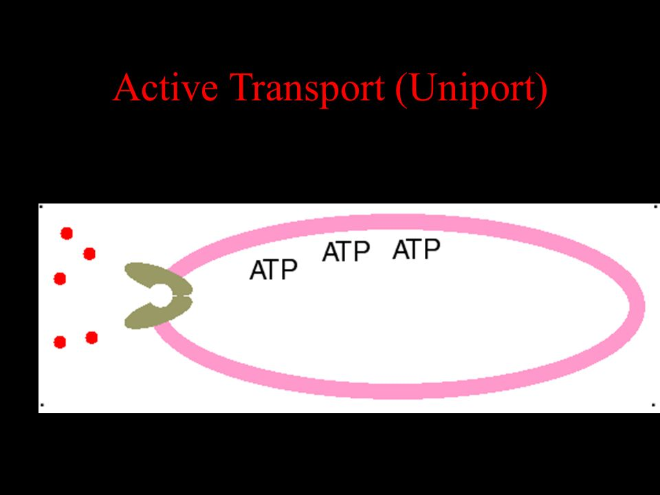 Active Transport (Uniport)