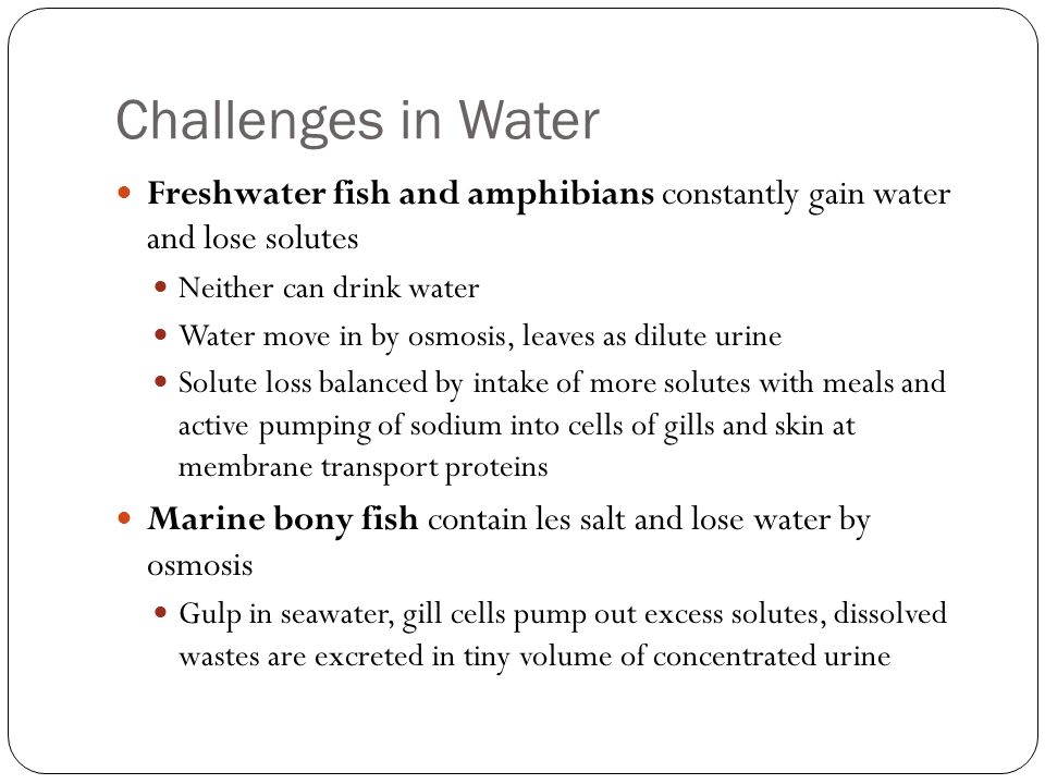 Challenges in Water Freshwater fish and amphibians constantly gain water and lose solutes Neither can drink water Water move in by osmosis, leaves as