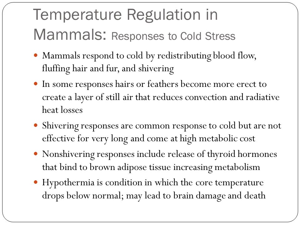 Temperature Regulation in Mammals: Responses to Cold Stress Mammals respond to cold by redistributing blood flow, fluffing hair and fur, and shivering