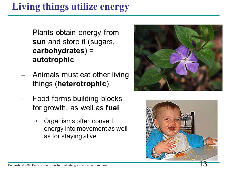 Copyright © 2005 Pearson Education, Inc. publishing as Benjamin Cummings Living things utilize energy – Plants obtain energy from sun and store it (su