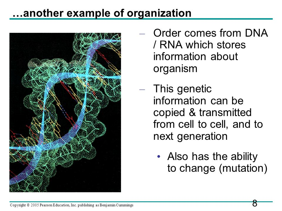 Copyright © 2005 Pearson Education, Inc. publishing as Benjamin Cummings – Order comes from DNA / RNA which stores information about organism – This g