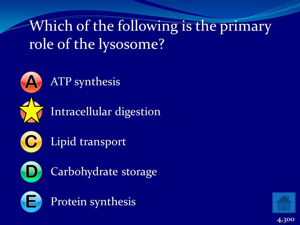 Which of the following is the primary role of the lysosome? ATP synthesisIntracellular digestionLipid transportCarbohydrate storageProtein synthesis 4