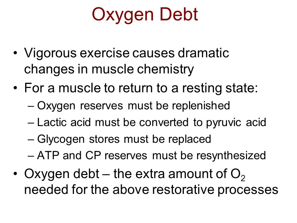 Oxygen Debt Vigorous exercise causes dramatic changes in muscle chemistry For a muscle to return to a resting state: –Oxygen reserves must be replenis
