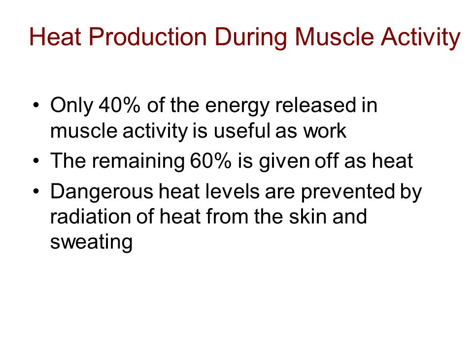Heat Production During Muscle Activity Only 40% of the energy released in muscle activity is useful as work The remaining 60% is given off as heat Dan