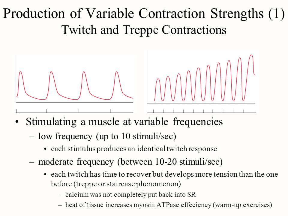 Production of Variable Contraction Strengths (1) Twitch and Treppe Contractions Stimulating a muscle at variable frequencies –low frequency (up to 10