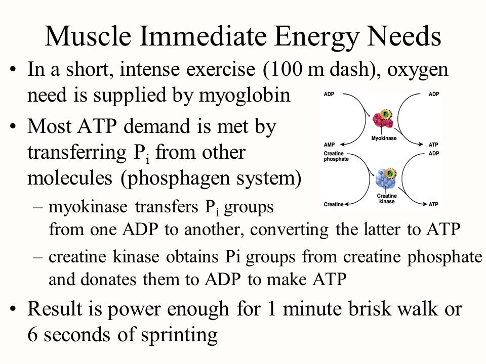 Muscle Immediate Energy Needs In a short, intense exercise (100 m dash), oxygen need is supplied by myoglobin Most ATP demand is met by transferring P