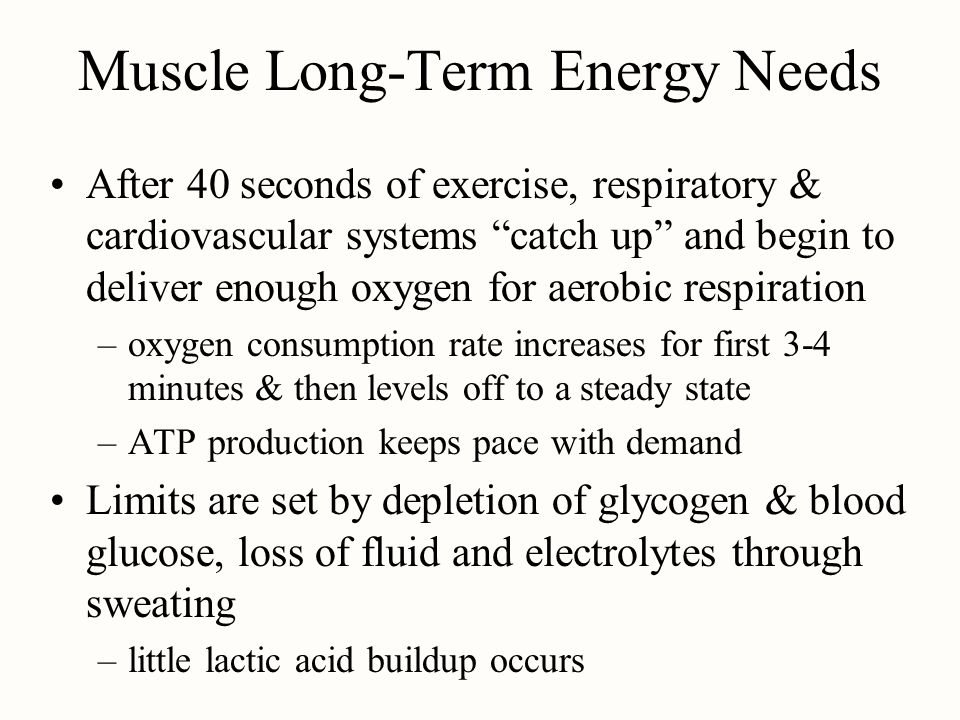 Muscle Long-Term Energy Needs After 40 seconds of exercise, respiratory & cardiovascular systems catch up and begin to deliver enough oxygen for aerob