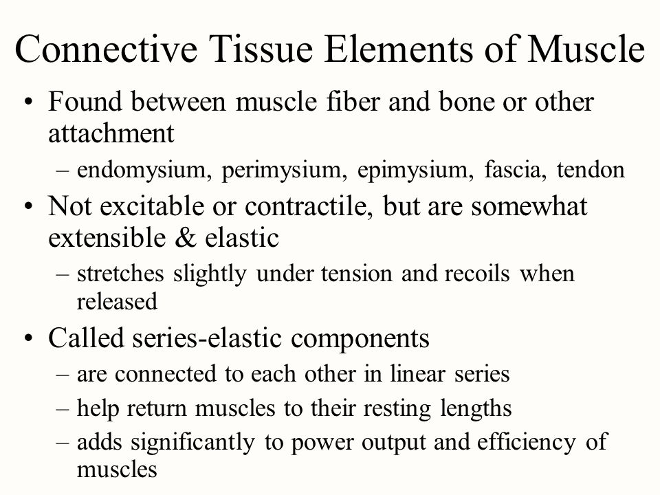 Connective Tissue Elements of Muscle Found between muscle fiber and bone or other attachment –endomysium, perimysium, epimysium, fascia, tendon Not ex