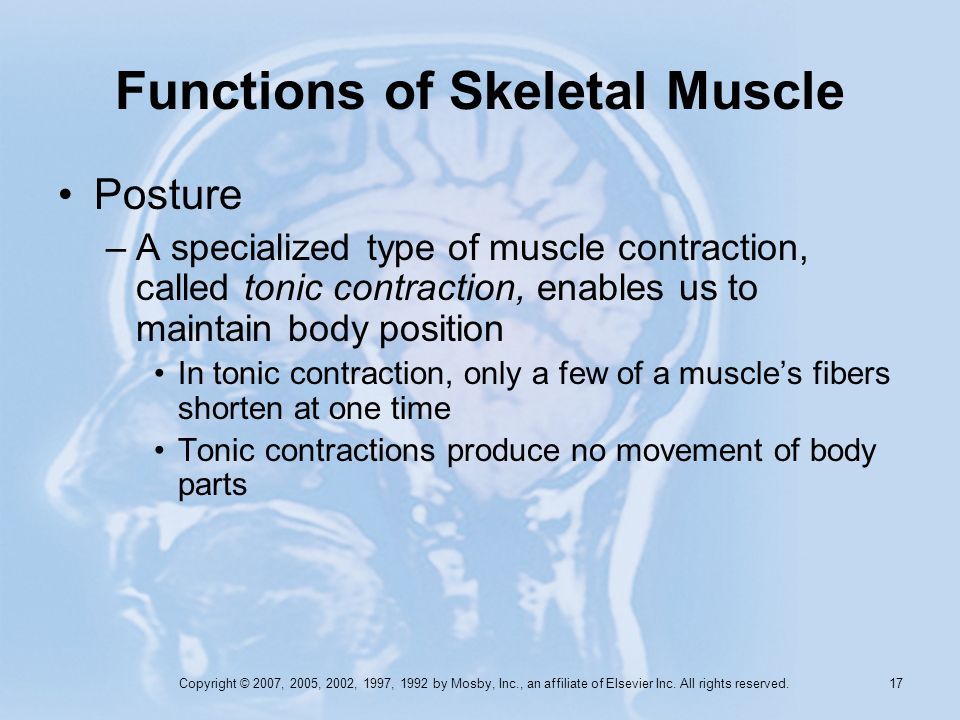 Copyright © 2007, 2005, 2002, 1997, 1992 by Mosby, Inc., an affiliate of Elsevier Inc. All rights reserved. 16 Functions of Skeletal Muscle Movement –