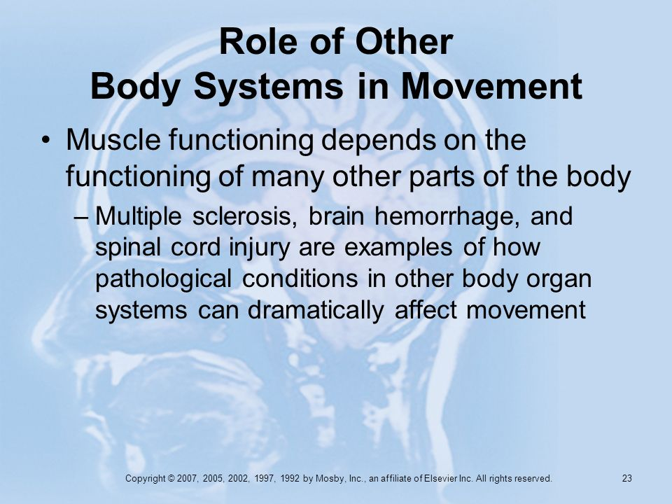 Copyright © 2007, 2005, 2002, 1997, 1992 by Mosby, Inc., an affiliate of Elsevier Inc. All rights reserved. 22 Role of Other Body Systems in Movement