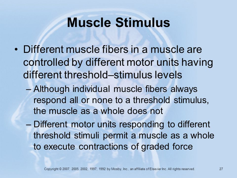 Copyright © 2007, 2005, 2002, 1997, 1992 by Mosby, Inc., an affiliate of Elsevier Inc. All rights reserved. 26 Muscle Stimulus A muscle will contract
