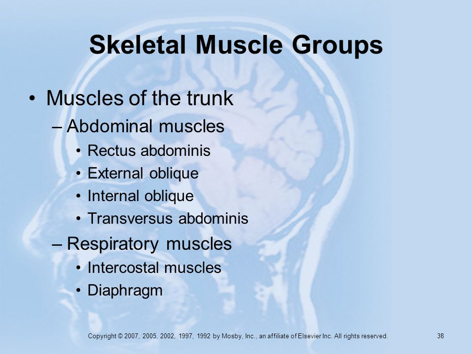 Copyright © 2007, 2005, 2002, 1997, 1992 by Mosby, Inc., an affiliate of Elsevier Inc. All rights reserved. 37 Skeletal Muscle Groups Muscles that mov