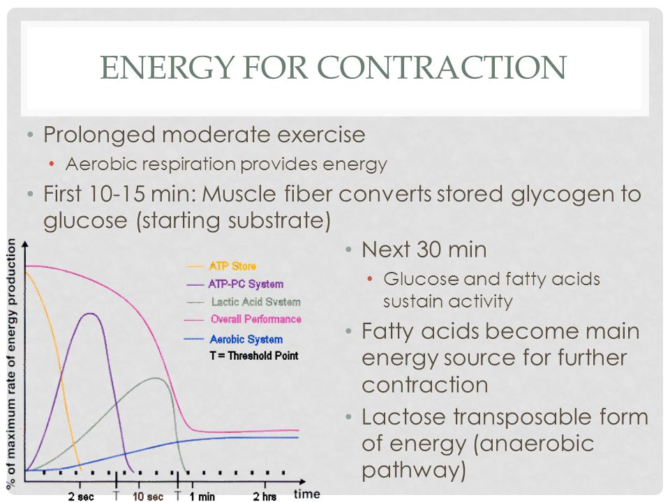 ENERGY FOR CONTRACTION Prolonged moderate exercise Aerobic respiration provides energy First 10-15 min: Muscle fiber converts stored glycogen to gluco
