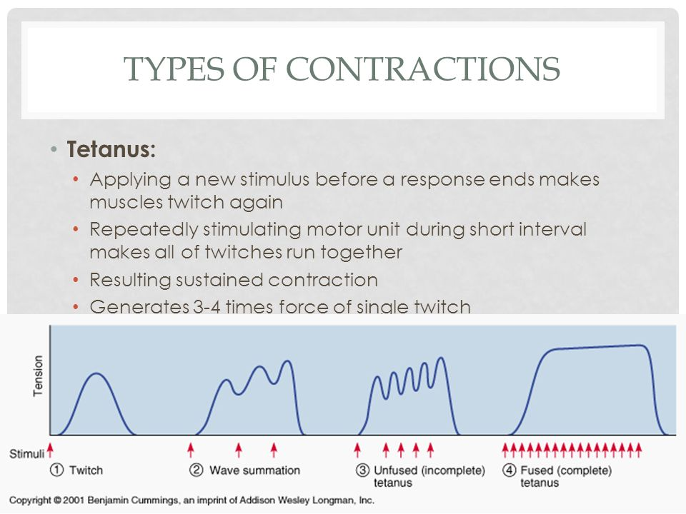 TYPES OF CONTRACTIONS Tetanus: Applying a new stimulus before a response ends makes muscles twitch again Repeatedly stimulating motor unit during shor