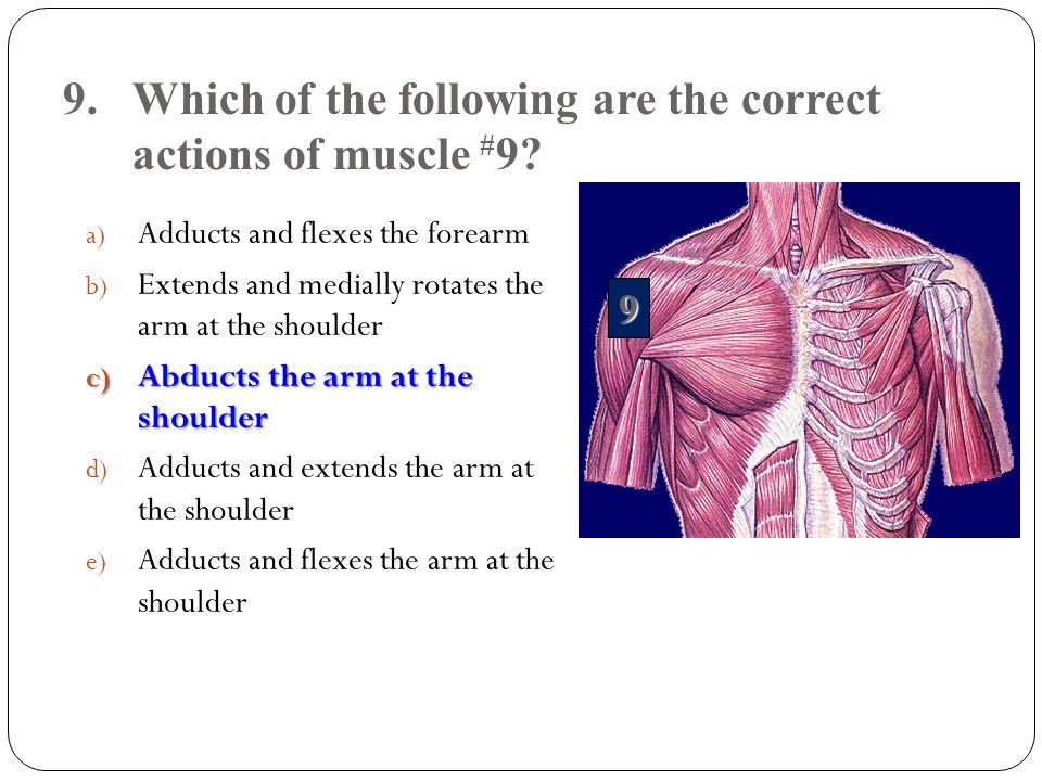 9.Which of the following are the correct actions of muscle # 9? a) Adducts and flexes the forearm b) Extends and medially rotates the arm at the shoul