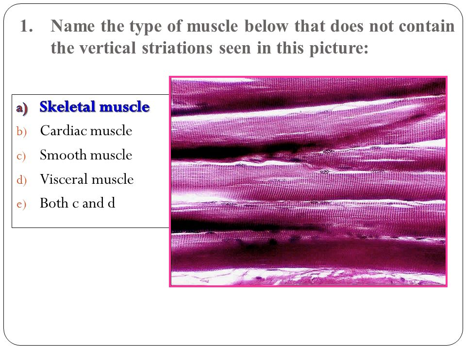 12.What muscle is a synergist to muscle # 12.