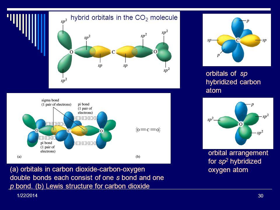 30 1/22/2014 orbitals of sp hybridized carbon atom orbital arrangement for sp 2 hybridized oxygen atom hybrid orbitals in the CO 2 molecule (a) orbita