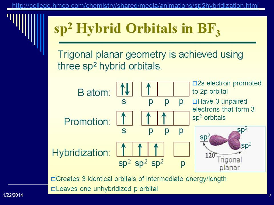 7 2s electron promoted to 2p orbital Have 3 unpaired electrons that form 3 sp 2 orbitals Creates 3 identical orbitals of intermediate energy/length Le