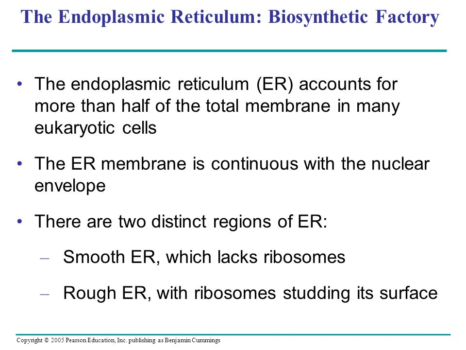 Copyright © 2005 Pearson Education, Inc. publishing as Benjamin Cummings The Endoplasmic Reticulum: Biosynthetic Factory The endoplasmic reticulum (ER