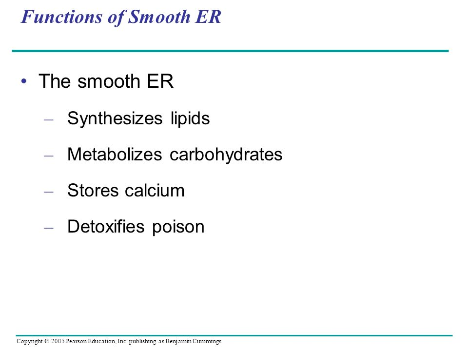 Copyright © 2005 Pearson Education, Inc. publishing as Benjamin Cummings Functions of Smooth ER The smooth ER – Synthesizes lipids – Metabolizes carbo