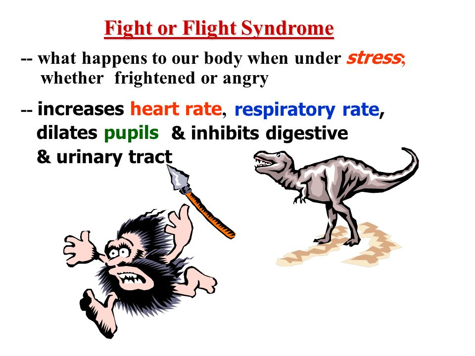 Fight or Flight Syndrome -- what happens to our body when under stress ; whether frightened or angry -- increases heart rate, dilates pupils respirato