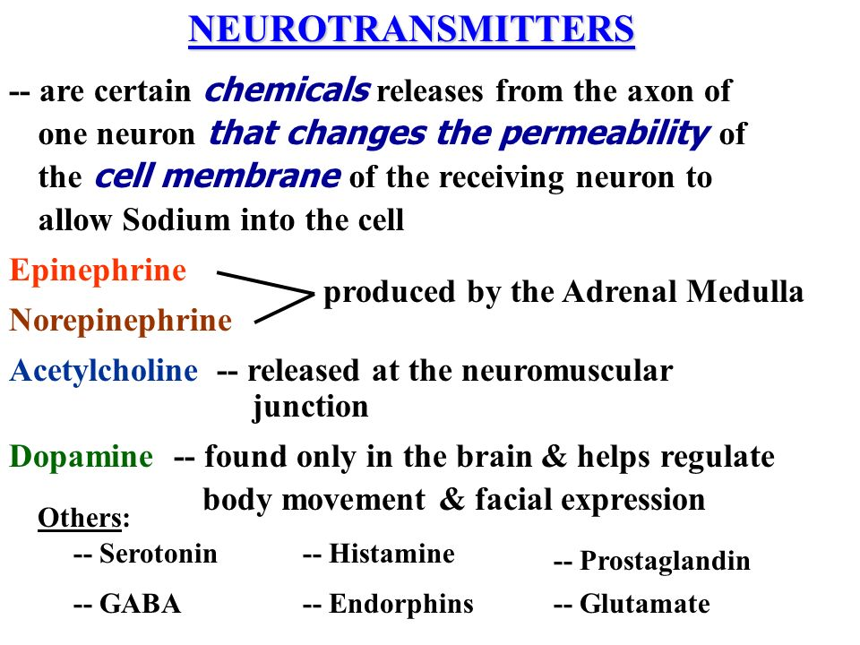 NEUROTRANSMITTERS Epinephrine Norepinephrine produced by the Adrenal Medulla Dopamine-- found only in the brain & helps regulate body movement & facia