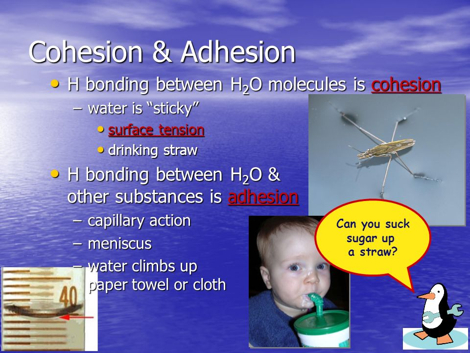 Cohesion & Adhesion H bonding between H 2 O molecules is cohesion H bonding between H 2 O molecules is cohesion –water is sticky surface tension surface tension drinking straw drinking straw H bonding between H 2 O & other substances is adhesion H bonding between H 2 O & other substances is adhesion –capillary action –meniscus –water climbs up paper towel or cloth Can you suck sugar up a straw?