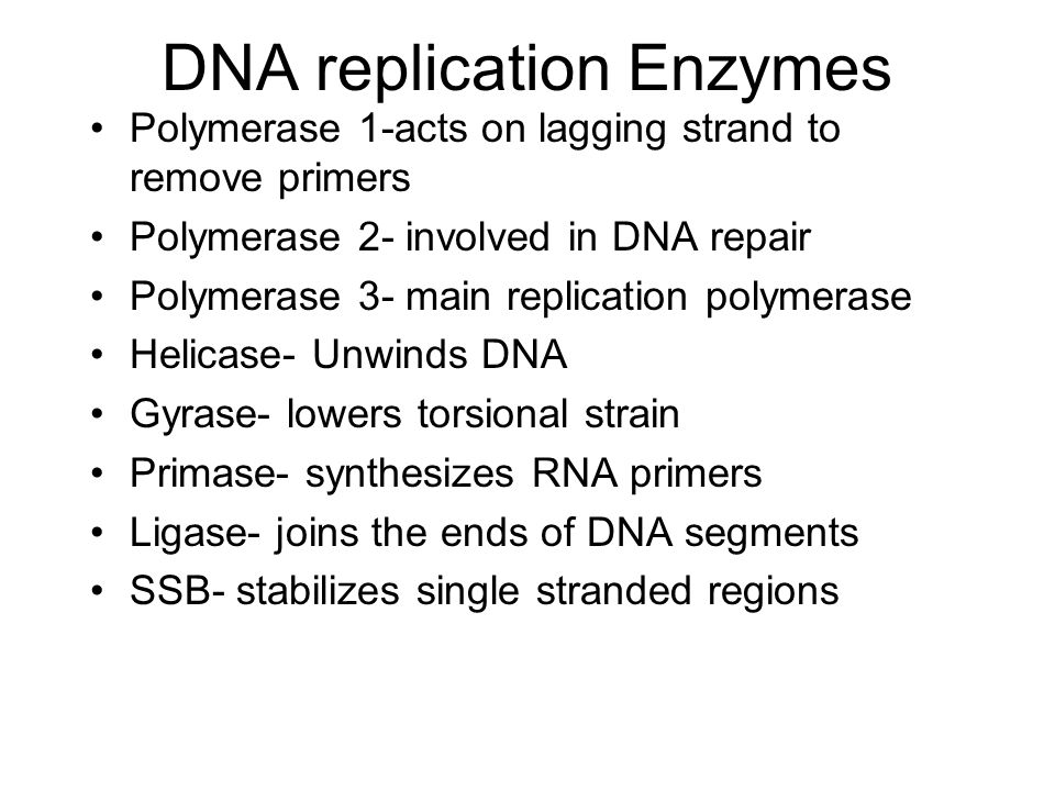 DNA replication Enzymes Polymerase 1-acts on lagging strand to remove primers Polymerase 2- involved in DNA repair Polymerase 3- main replication poly