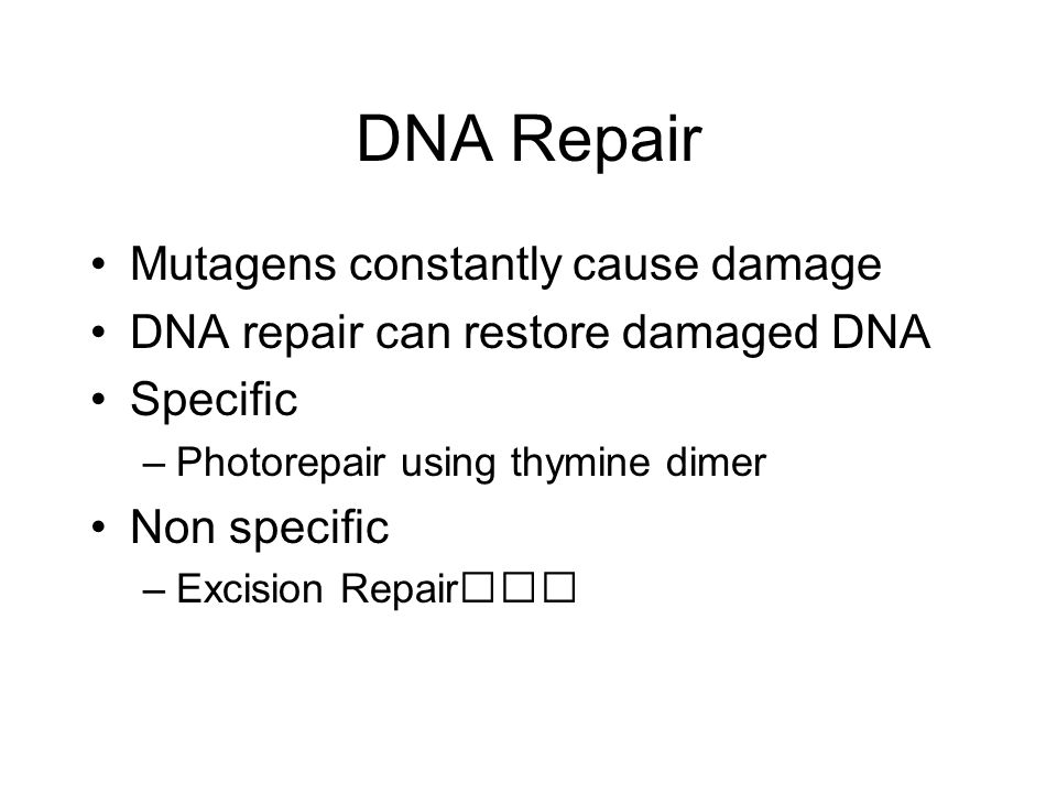 DNA Repair Mutagens constantly cause damage DNA repair can restore damaged DNA Specific –Photorepair using thymine dimer Non specific –Excision Repair