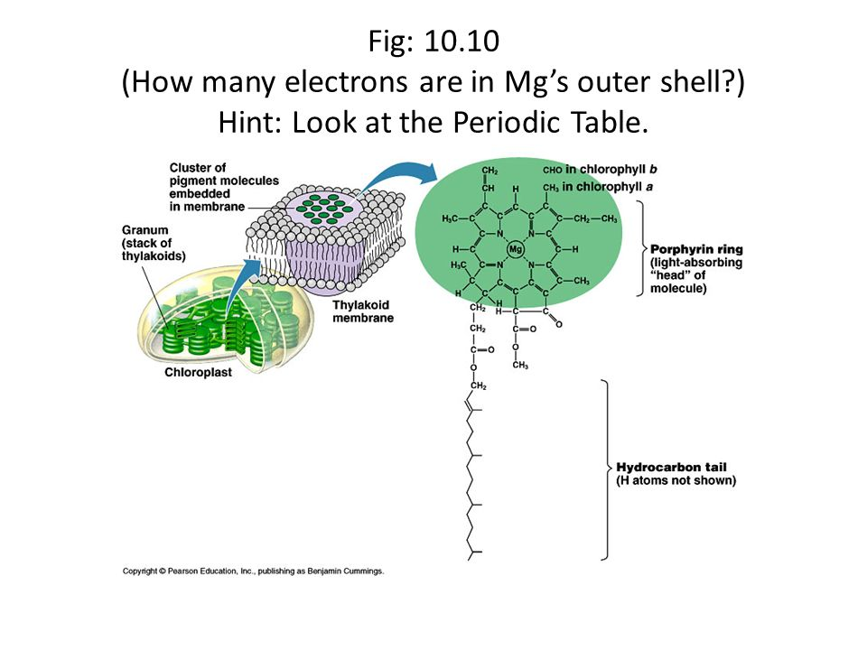 Fig: 10.10 (How many electrons are in Mgs outer shell?) Hint: Look at the Periodic Table.