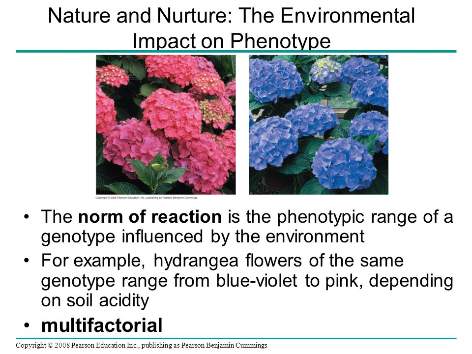 Nature and Nurture: The Environmental Impact on Phenotype The norm of reaction is the phenotypic range of a genotype influenced by the environment For