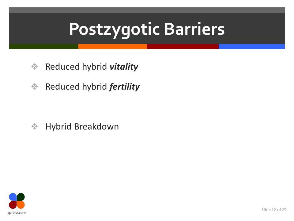 Slide 12 of 25 Postzygotic Barriers Reduced hybrid vitality Reduced hybrid fertility Hybrid Breakdown