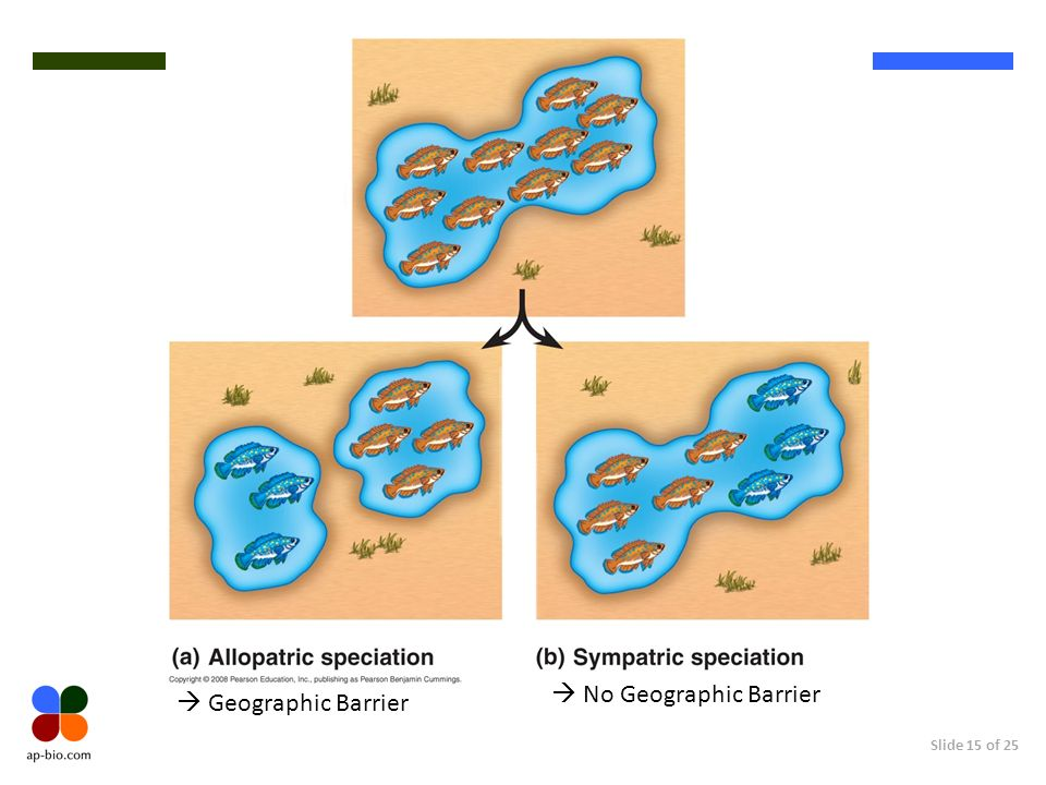 Slide 15 of 25 Geographic Barrier No Geographic Barrier