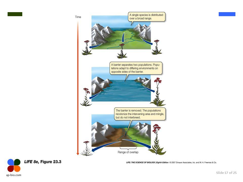 Slide 17 of 25
