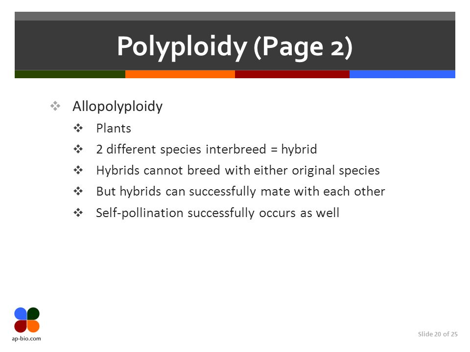 Slide 20 of 25 Polyploidy (Page 2) Allopolyploidy Plants 2 different species interbreed = hybrid Hybrids cannot breed with either original species But hybrids can successfully mate with each other Self-pollination successfully occurs as well