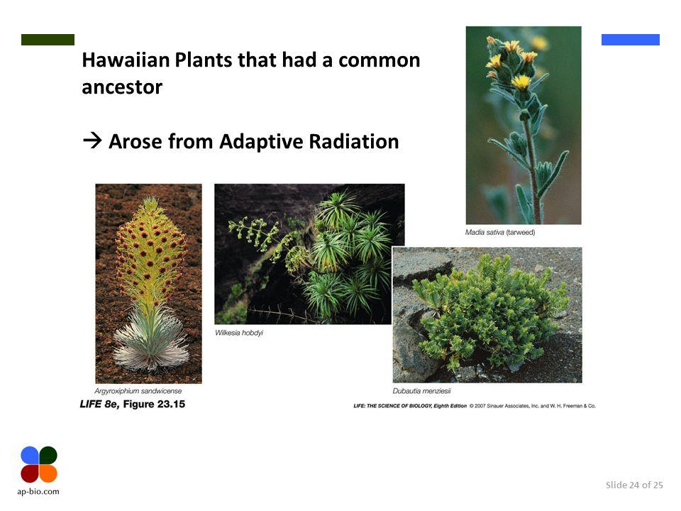 Slide 24 of 25 Hawaiian Plants that had a common ancestor Arose from Adaptive Radiation