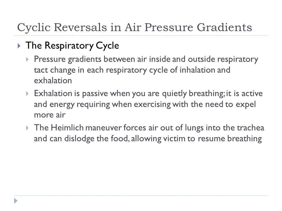 Cyclic Reversals in Air Pressure Gradients The Respiratory Cycle Pressure gradients between air inside and outside respiratory tact change in each res