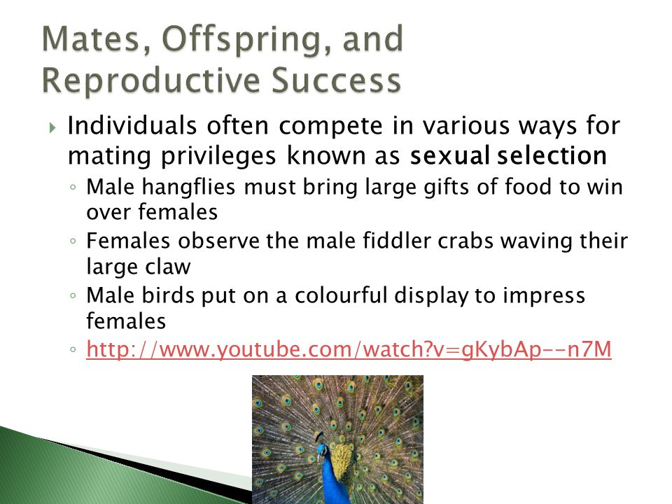 Individuals often compete in various ways for mating privileges known as sexual selection Male hangflies must bring large gifts of food to win over fe